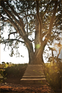 Kuungana - Your Spa, Wedding & Conference Resort
